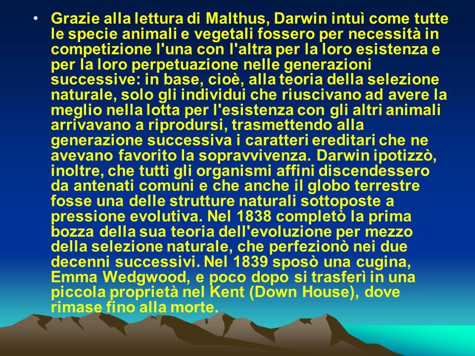 Grazie alla lettura di Malthus, Darwin intuì come tutte le specie animali e vegetali fossero per necessità in competizione l'una con l'altra per la lo