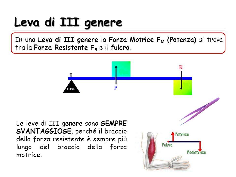 Leva di III genere In una Leva di III genere la Forza Motrice F M (Potenza) si trova tra la Forza Resistente F R e il fulcro. Le leve di III genere so
