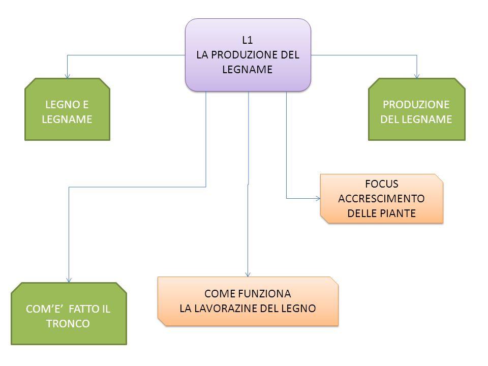 PRODUZIONE DEL LEGNAME COME FATTO IL TRONCO LEGNO E LEGNAME L1 LA PRODUZIONE DEL LEGNAME L1 LA PRODUZIONE DEL LEGNAME FOCUS ACCRESCIMENTO DELLE PIANTE FOCUS ACCRESCIMENTO DELLE PIANTE COME FUNZIONA LA LAVORAZINE DEL LEGNO COME FUNZIONA LA LAVORAZINE DEL LEGNO