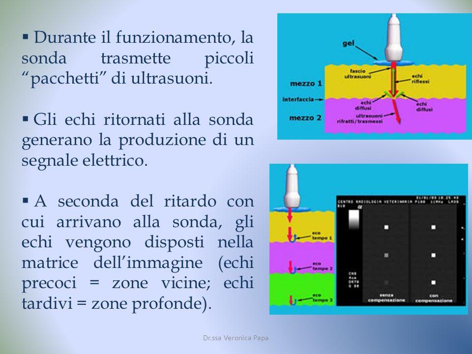 Dr.ssa Veronica Papa Durante il funzionamento, la sonda trasmette piccoli pacchetti di ultrasuoni.