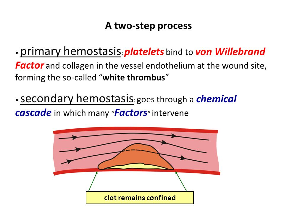 A two-step process primary hemostasis : platelets bind to von Willebrand Factor and collagen in the vessel endothelium at the wound site, forming the