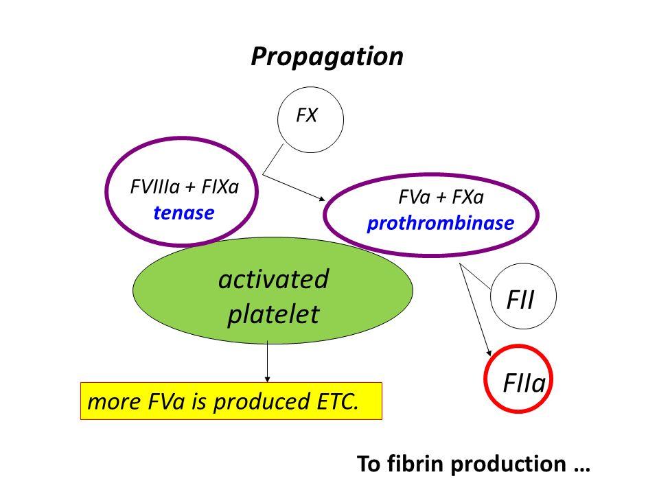 activated platelet FVIIIa + FIXa tenase Propagation FX FVa + FXa prothrombinase FII FIIa more FVa is produced ETC. To fibrin production …