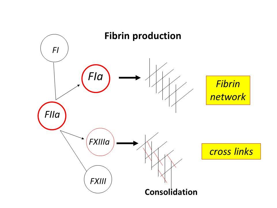 FIIa FI FIa FXIII FXIIIa Fibrin network cross links Fibrin production Consolidation