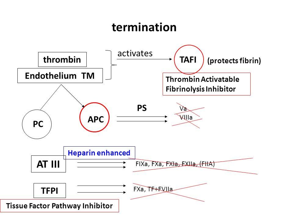 thrombin Endothelium TM termination TAFI (protects fibrin) PC APC PS Va VIIIa AT III TFPI FIXa, FXa, FXIa, FXIIa, (FIIA) FXa, TF+FVIIa Thrombin Activa