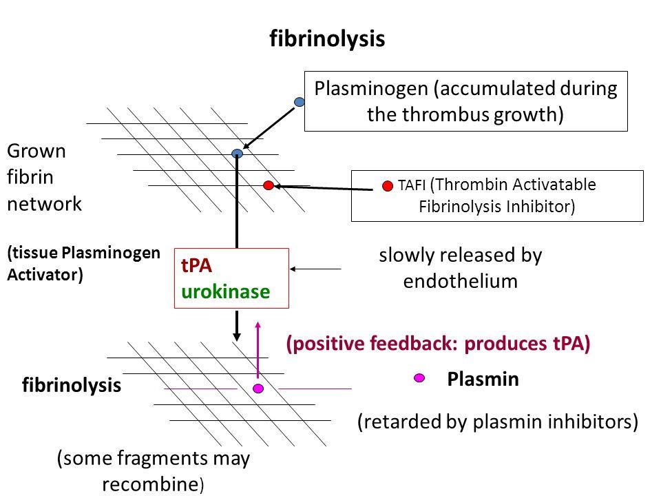 fibrinolysis Plasminogen (accumulated during the thrombus growth) TAFI (Thrombin Activatable Fibrinolysis Inhibitor) tPA urokinase Plasmin Grown fibri