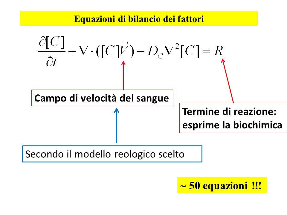 Campo di velocità del sangue Termine di reazione: esprime la biochimica Secondo il modello reologico scelto Equazioni di bilancio dei fattori 50 equaz