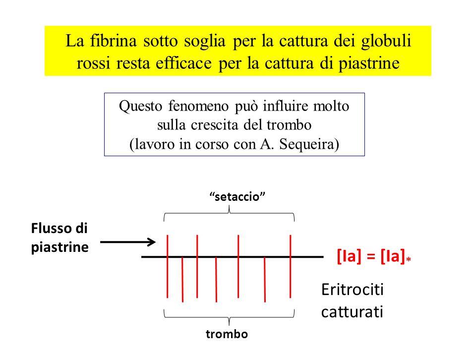 La fibrina sotto soglia per la cattura dei globuli rossi resta efficace per la cattura di piastrine trombo Eritrociti catturati Flusso di piastrine se