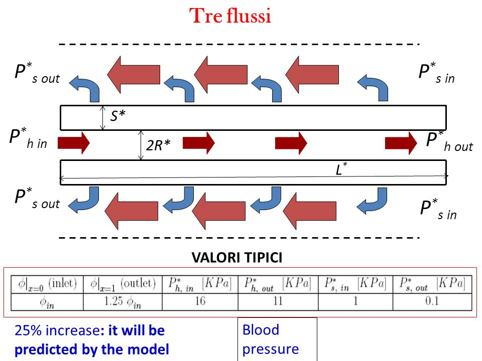 Tre flussi P * h in P * h out S* 2R* L*L* P * s out P * s in VALORI TIPICI 25% increase: it will be predicted by the model Blood pressure