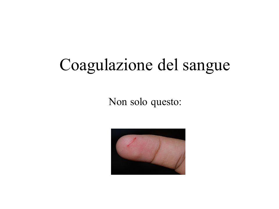 Coagulazione del sangue Non solo questo: