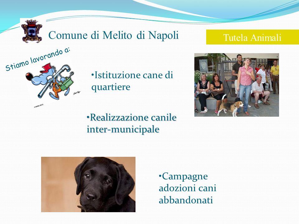 Comune di Melito di Napoli Stiamo lavorando a: Tutela Animali Istituzione cane di quartiere Campagne adozioni cani abbandonati Realizzazione canile inter-municipaleRealizzazione canile inter-municipale