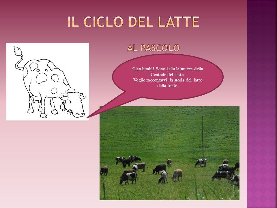 Ciao bimbi! Sono Lulù la mucca della Centrale del latte. Voglio raccontarvi la storia del latte dalla fonte.