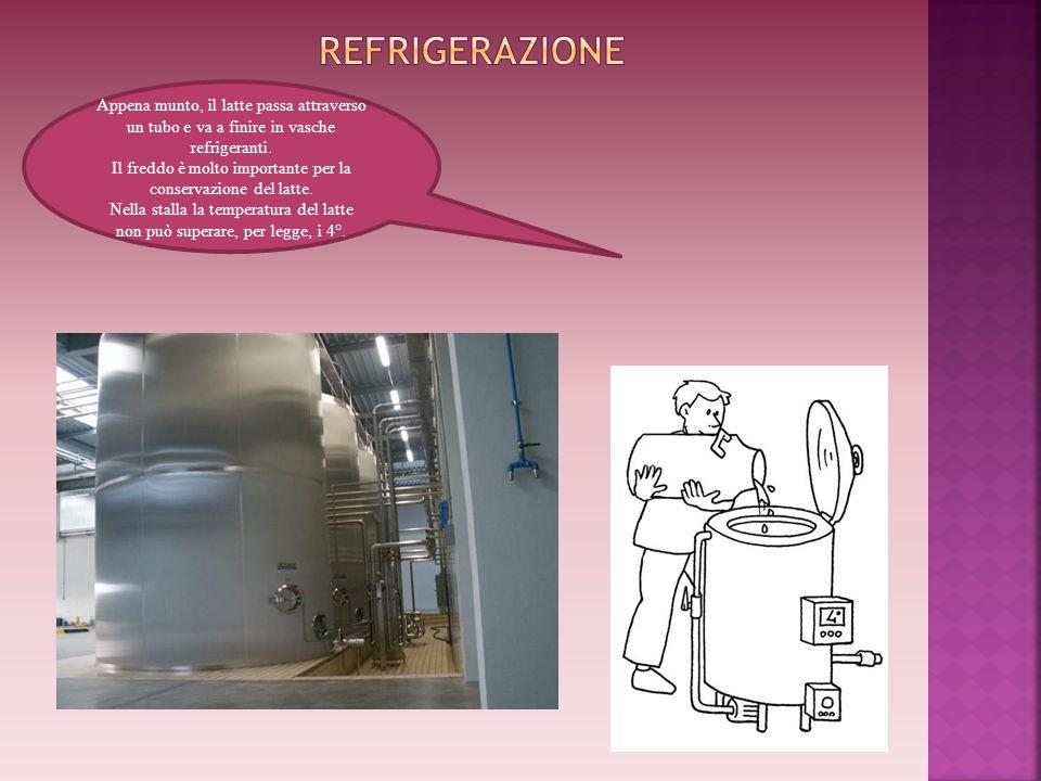 Appena munto, il latte passa attraverso un tubo e va a finire in vasche refrigeranti. Il freddo è molto importante per la conservazione del latte. Nel