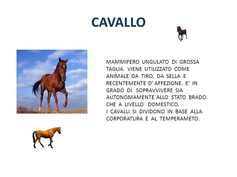 CAVALLO MAMMIFERO UNGULATO DI GROSSA TAGLIA. VIENE UTILIZZATO COME ANIMALE DA TIRO, DA SELLA E RECENTEMENTE D AFFEZIONE. E IN GRADO DI SOPRAVVIVERE SI