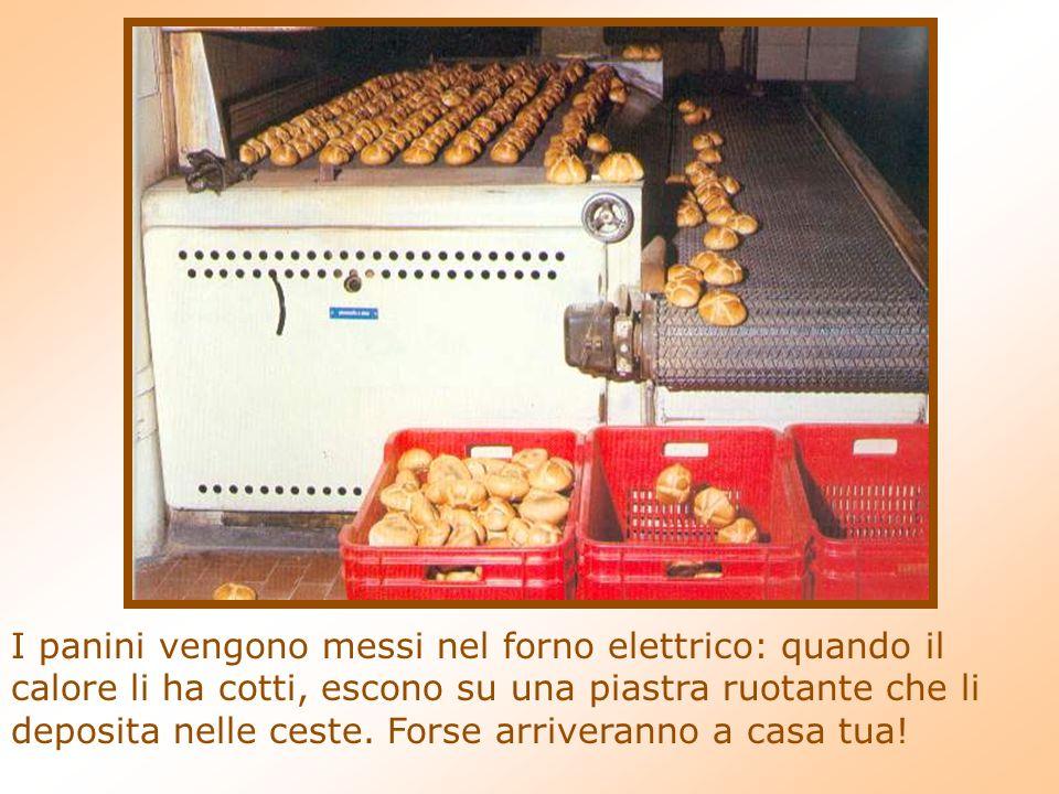I panini vengono messi nel forno elettrico: quando il calore li ha cotti, escono su una piastra ruotante che li deposita nelle ceste.