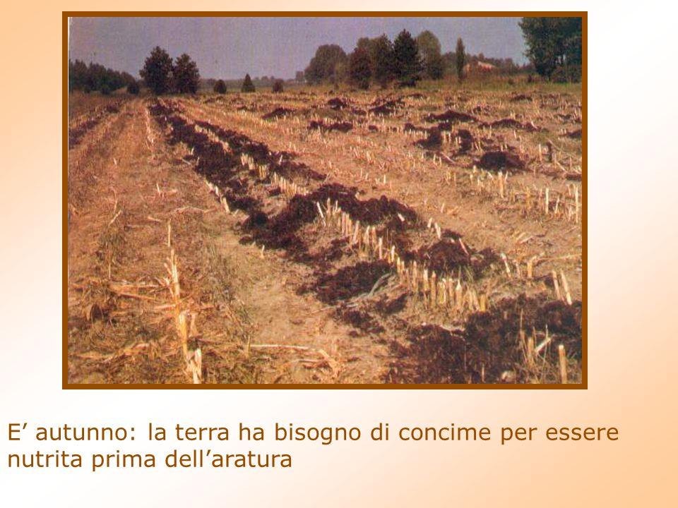 E autunno: la terra ha bisogno di concime per essere nutrita prima dellaratura