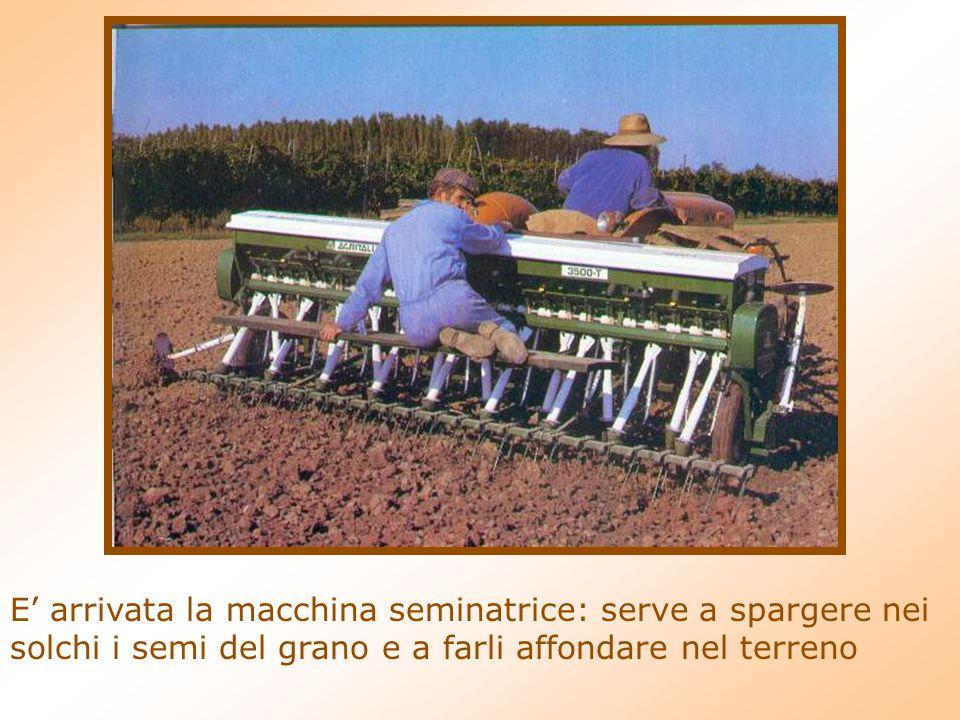E arrivata la macchina seminatrice: serve a spargere nei solchi i semi del grano e a farli affondare nel terreno