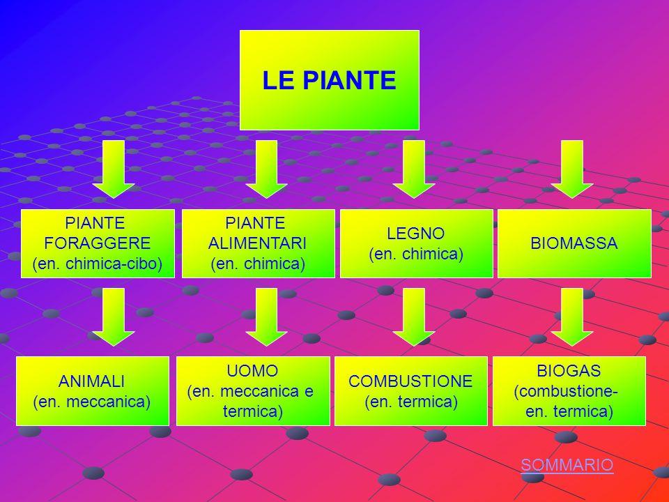 LE PIANTE PIANTE ALIMENTARI (en.chimica) LEGNO (en.
