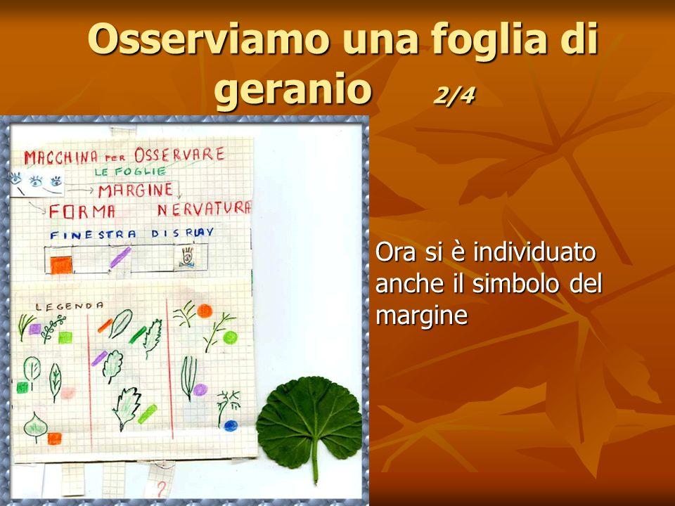 Osserviamo una foglia di geranio 2/4 Ora si è individuato anche il simbolo del margine Ora si è individuato anche il simbolo del margine