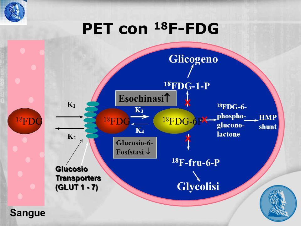 GlucosioTransporters (GLUT 1 - 7) K3K3 K4K4 Esochinasi Glucosio-6- Fosfstasi 18 FDG-1-P Glicogeno 18 F-fru-6-P Glycolisi 18 FDG-6- phospho- glucono- l