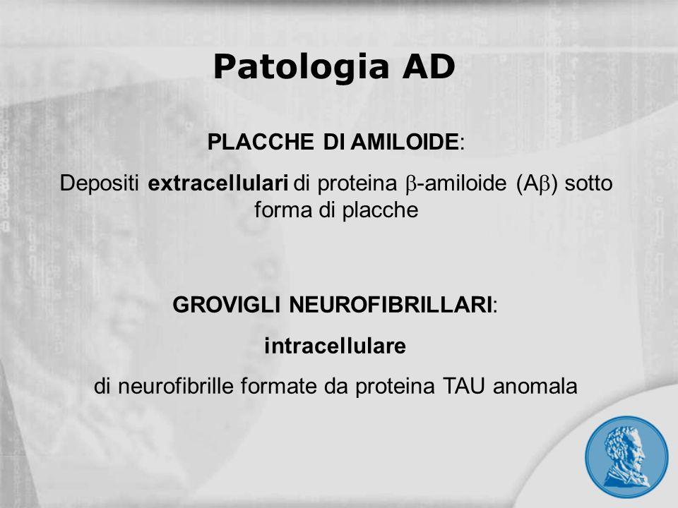 PLACCHE DI AMILOIDE: Depositi extracellulari di proteina -amiloide (A ) sotto forma di placche GROVIGLI NEUROFIBRILLARI: intracellulare di neurofibril