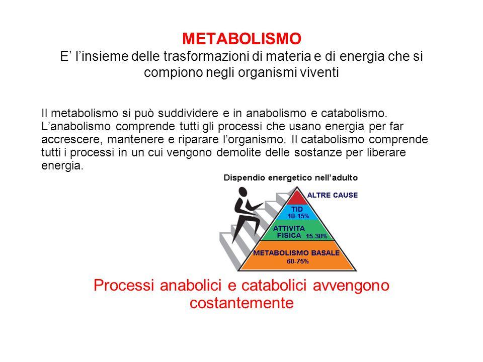 METABOLISMO E linsieme delle trasformazioni di materia e di energia che si compiono negli organismi viventi Il metabolismo si può suddividere e in ana