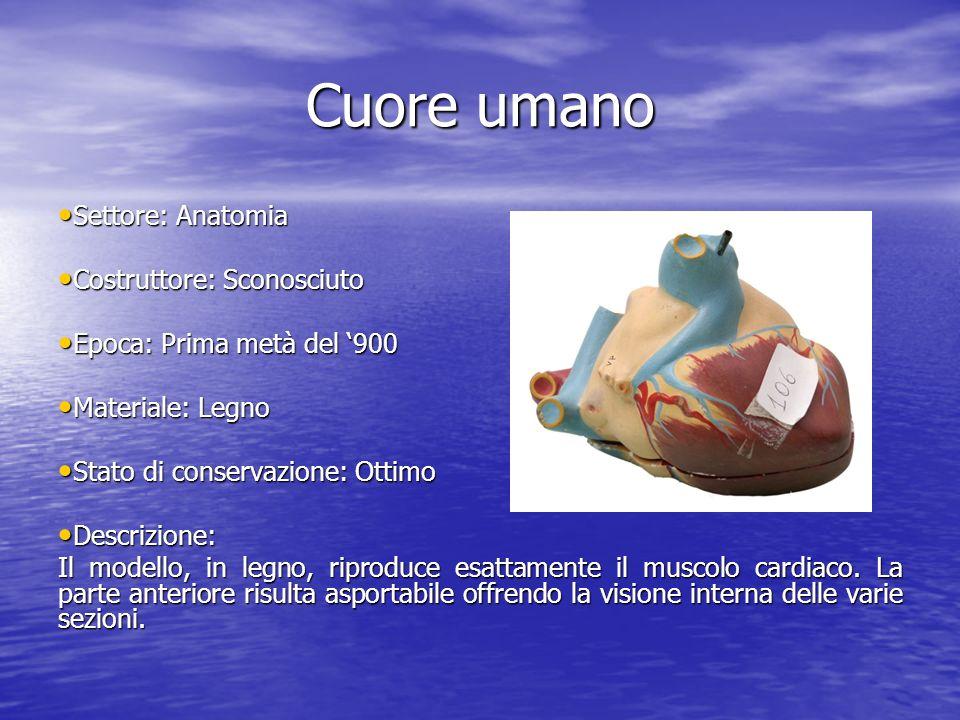 Cuore umano Settore: Anatomia Settore: Anatomia Costruttore: Sconosciuto Costruttore: Sconosciuto Epoca: Prima metà del 900 Epoca: Prima metà del 900