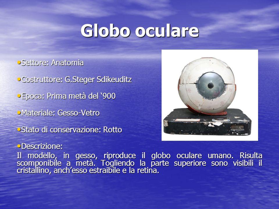 Globo oculare Settore: Anatomia Settore: Anatomia Costruttore: G.Steger Sdikeuditz Costruttore: G.Steger Sdikeuditz Epoca: Prima metà del 900 Epoca: P