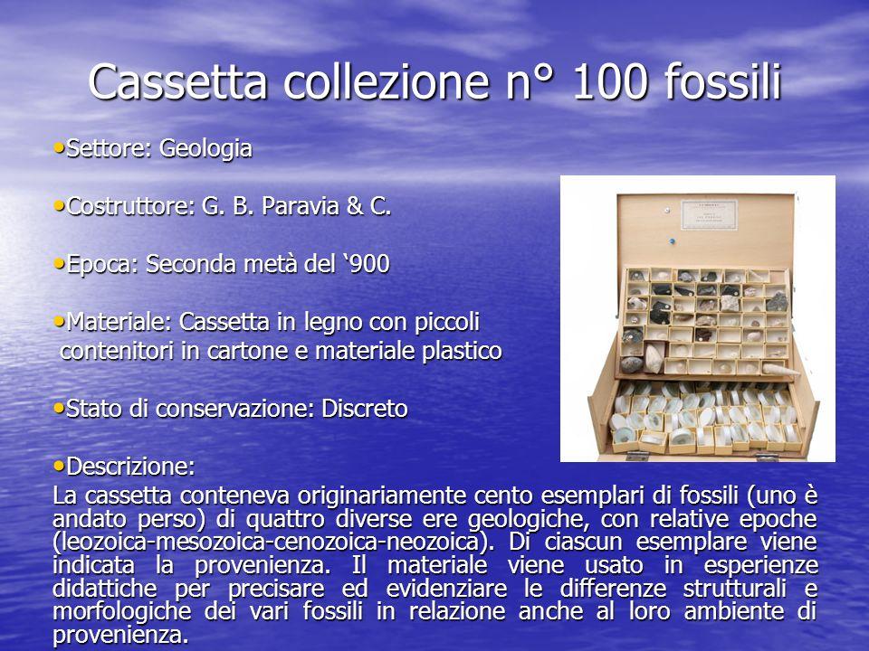 Cassetta collezione n° 100 fossili Settore: Geologia Settore: Geologia Costruttore: G. B. Paravia & C. Costruttore: G. B. Paravia & C. Epoca: Seconda