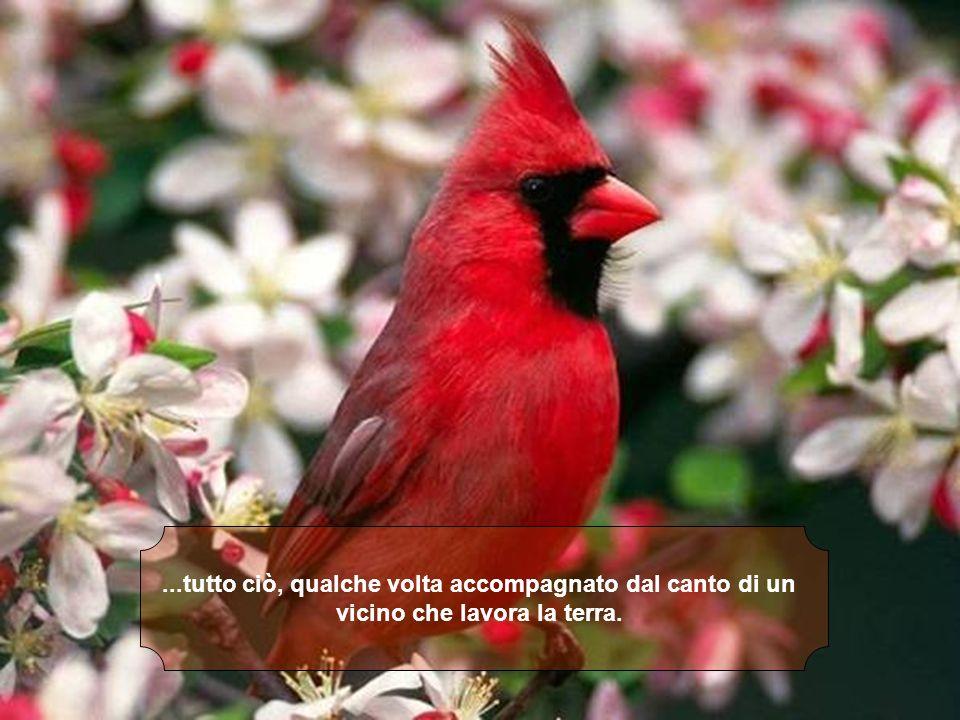 6 – Che noi ascoltiamo CD... Loro ascoltano una sinfonia continua di pappagalli, grilli e altri animali...