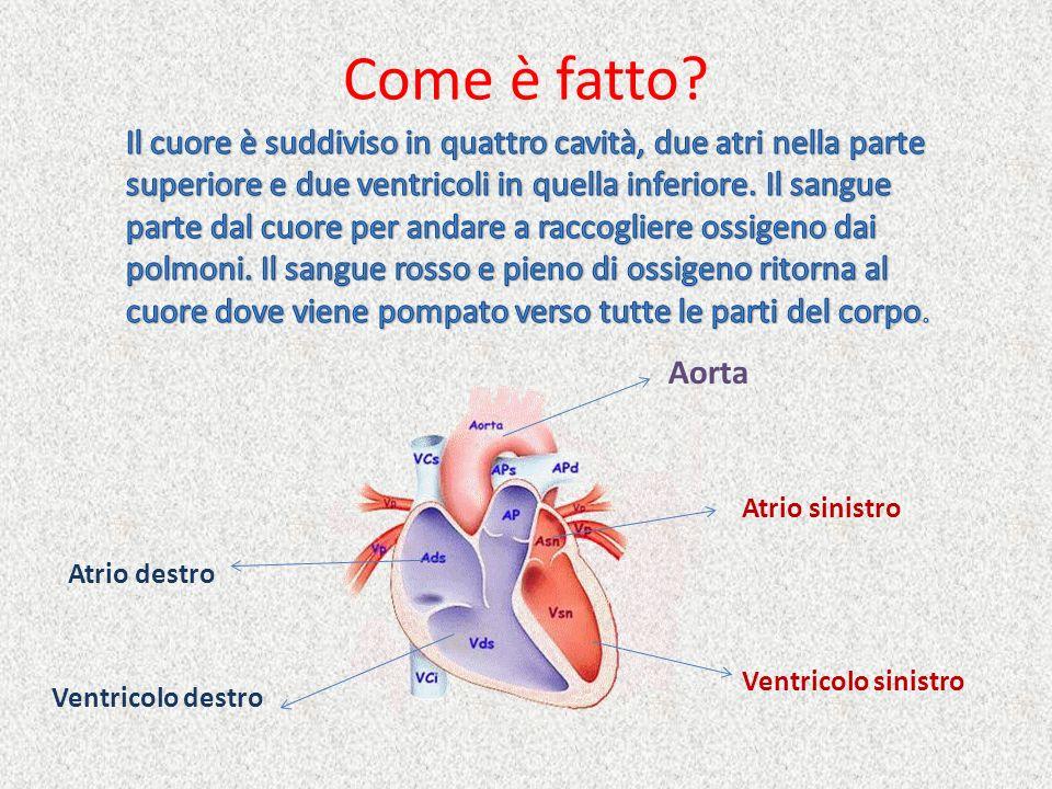 Come è fatto? Ventricolo sinistro Ventricolo destro Atrio destro Atrio sinistro Aorta