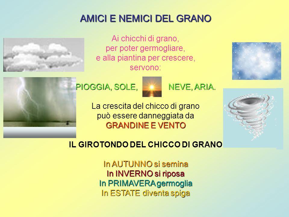 AMICI E NEMICI DEL GRANO Ai chicchi di grano, per poter germogliare, e alla piantina per crescere, servono: PIOGGIA, SOLE, NEVE, ARIA. La crescita del