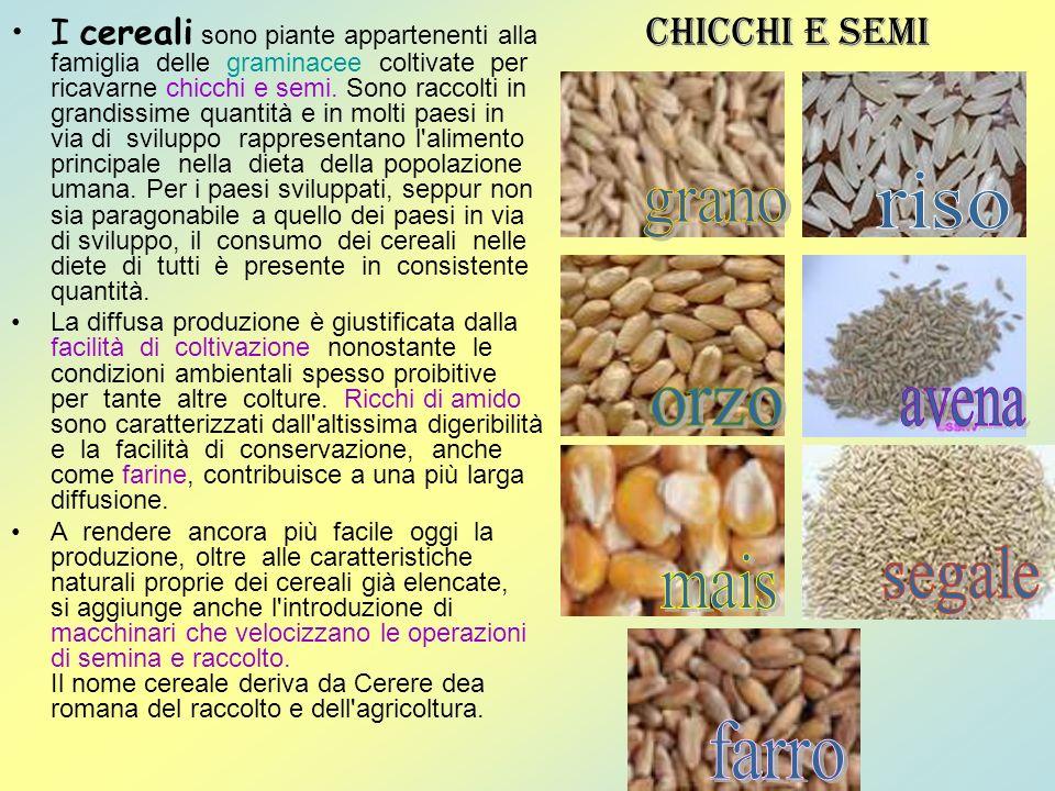 I cereali sono piante appartenenti alla famiglia delle graminacee coltivate per ricavarne chicchi e semi. Sono raccolti in grandissime quantità e in m