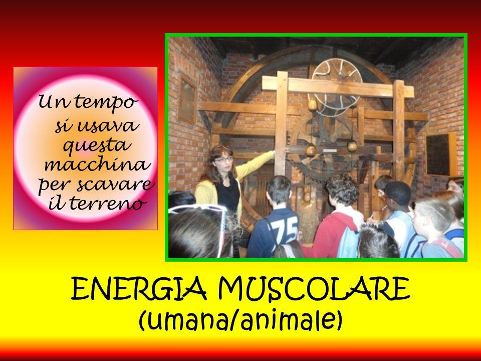 ENERGIA MUSCOLARE (umana/animale) Un tempo si usava questa macchina per scavare il terreno