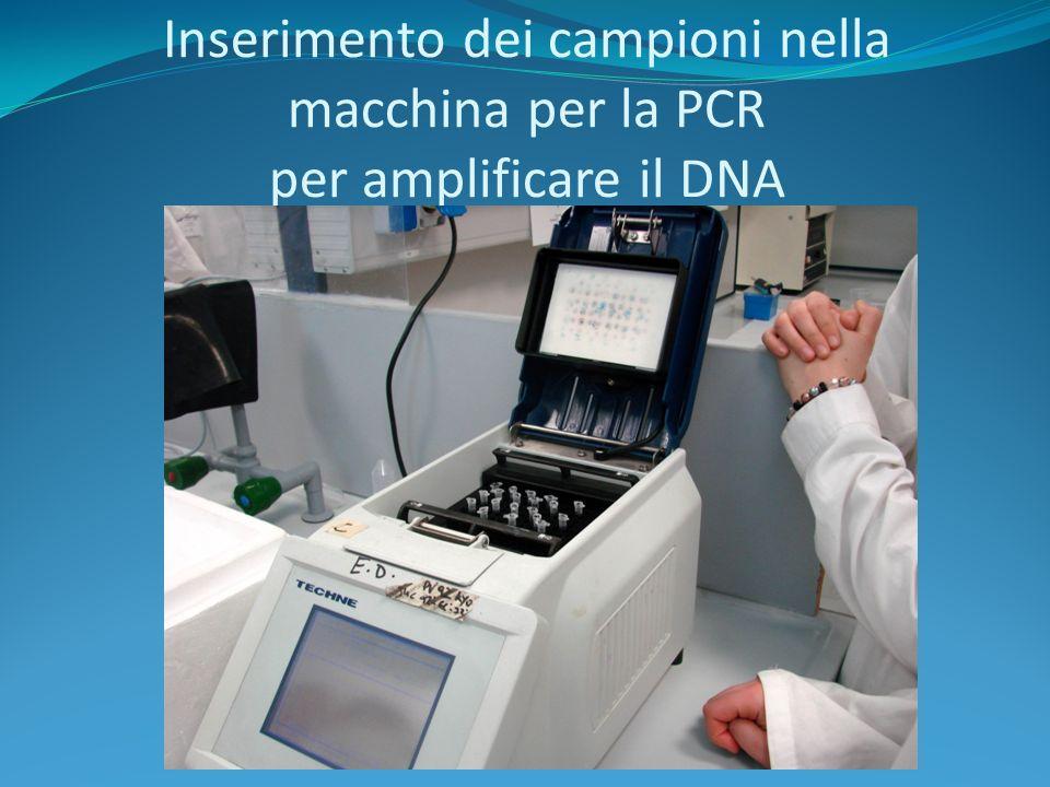 Recupero del DNA ed aggiunta degli oligonucleotidi, dei primer e della Taq.polimerasi