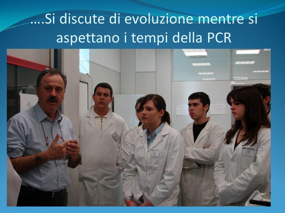 Inserimento dei campioni nella macchina per la PCR per amplificare il DNA