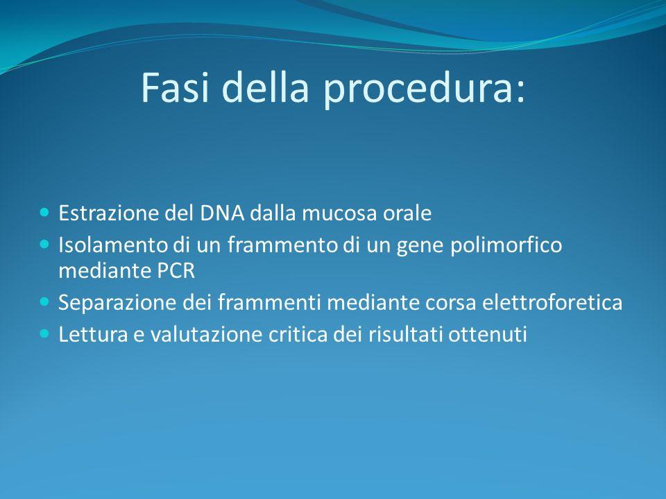 Fasi della procedura: Estrazione del DNA dalla mucosa orale Isolamento di un frammento di un gene polimorfico mediante PCR Separazione dei frammenti mediante corsa elettroforetica Lettura e valutazione critica dei risultati ottenuti