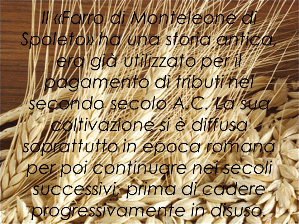 Il «Farro di Monteleone di Spoleto» ha una storia antica, era già utilizzato per il pagamento di tributi nel secondo secolo A.C.