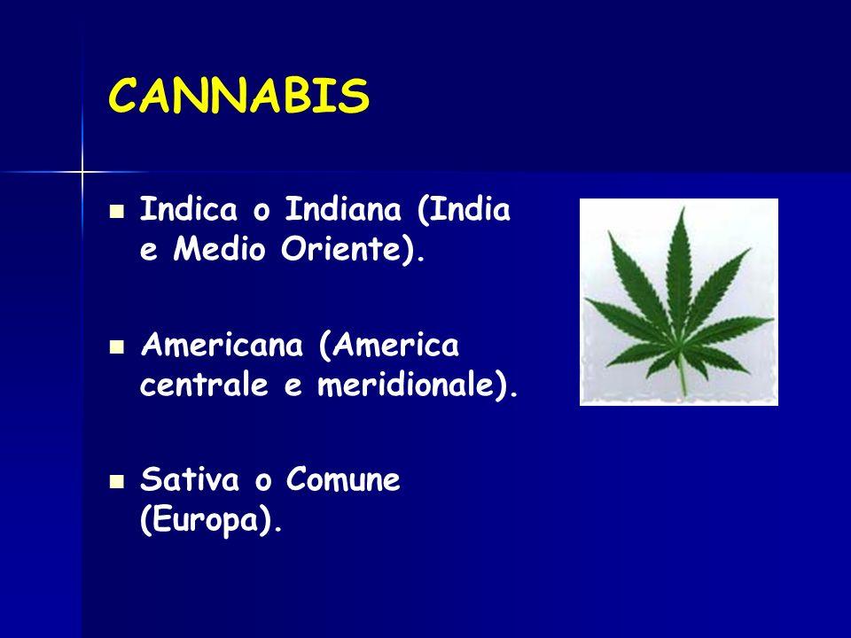 CANNABIS Indica o Indiana (India e Medio Oriente). Americana (America centrale e meridionale). Sativa o Comune (Europa).