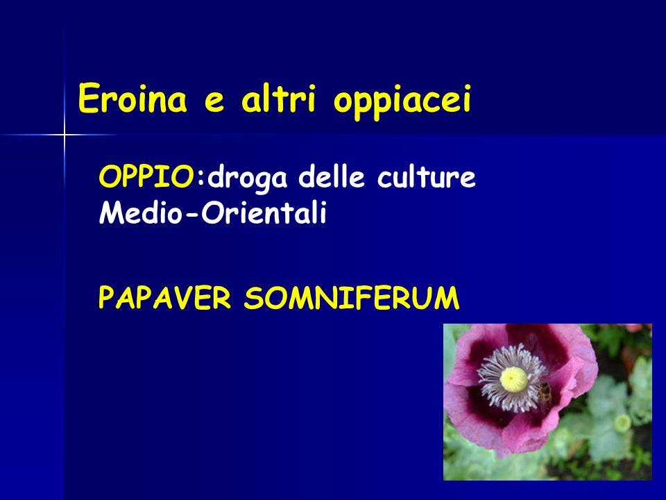Eroina e altri oppiacei OPPIO:droga delle culture Medio-Orientali PAPAVER SOMNIFERUM