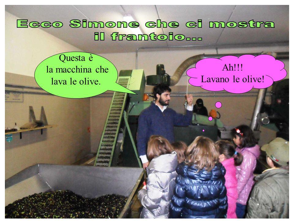 Questa è la macchina che lava le olive. Ah!!! Lavano le olive!