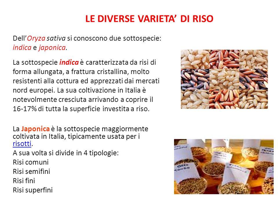 LE DIVERSE VARIETA DI RISO La Japonica è la sottospecie maggiormente coltivata in Italia, tipicamente usata per i risotti. risotti A sua volta si divi