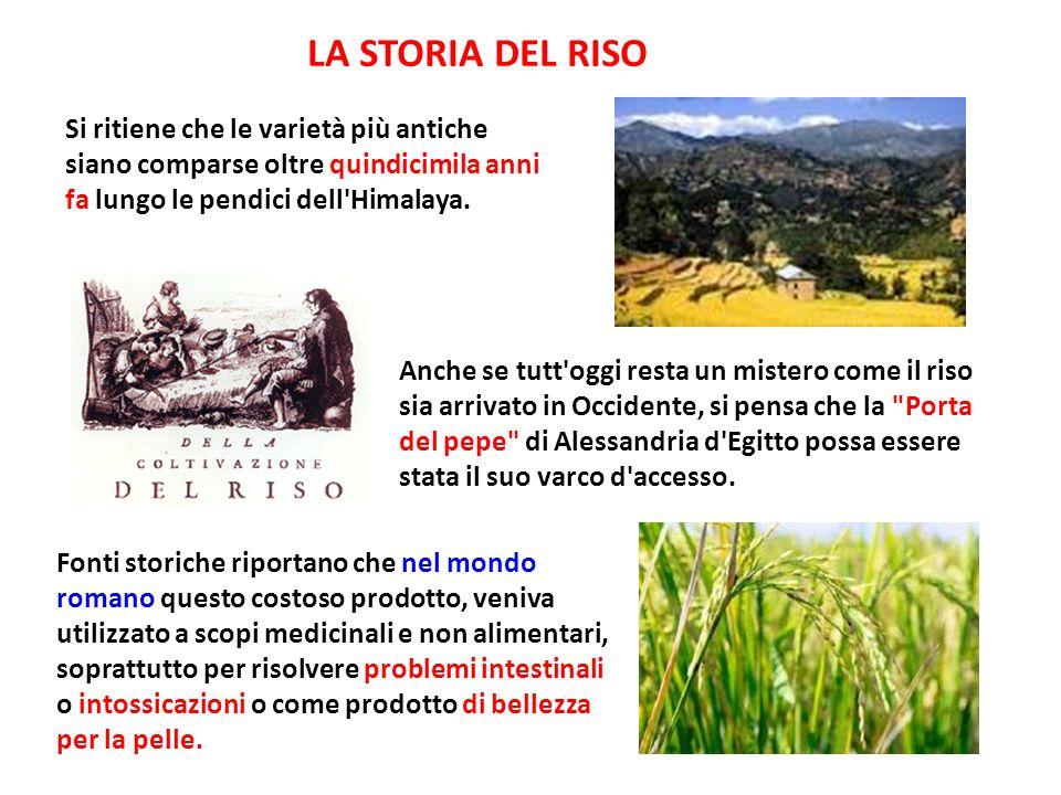 Il Riso arrivò definitivamente in Europa all inizio dell VIII sec.