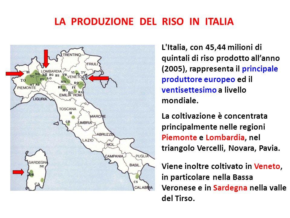 Viene inoltre coltivato in Veneto, in particolare nella Bassa Veronese e in Sardegna nella valle del Tirso. LA PRODUZIONE DEL RISO IN ITALIA L'Italia,