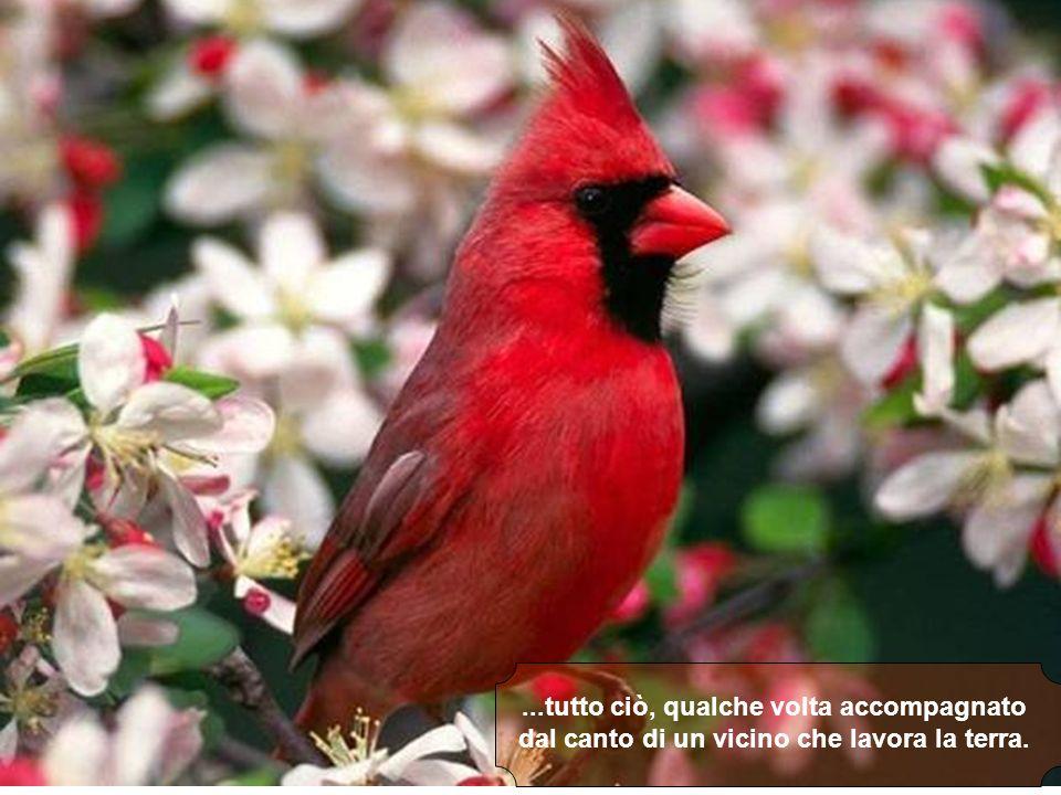 Che noi ascoltiamo CD... Loro ascoltano una sinfonia continua di pappagalli, grilli e altri animali...