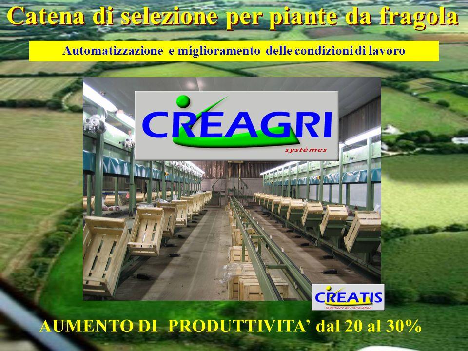 AUMENTO DI PRODUTTIVITA dal 20 al 30% Automatizzazione e miglioramento delle condizioni di lavoro Catena di selezione per piante da fragola
