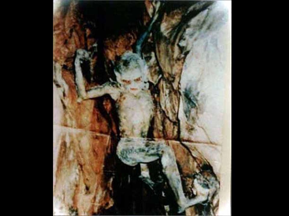 La foto seguente fu esibita come prova in unindagine poliziesca su uno strano incidente.