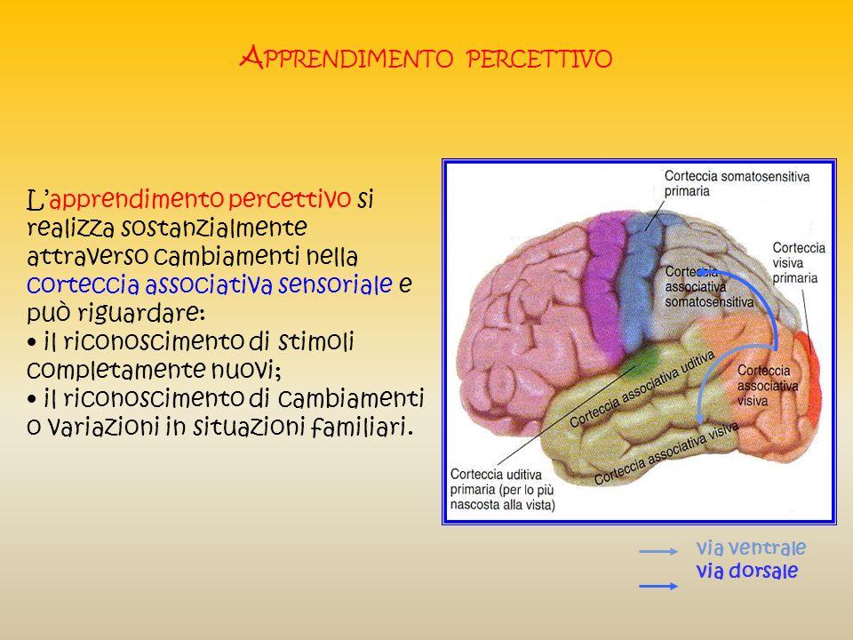 A PPRENDIMENTO PERCETTIVO Lapprendimento percettivo è la capacità di imparare a riconoscere particolari stimoli (oggetti, persone, situazioni) al fine