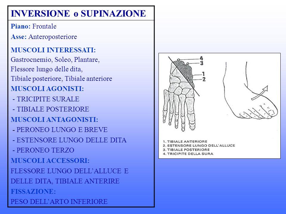 INVERSIONE o SUPINAZIONE Piano: Frontale Asse: Anteroposteriore MUSCOLI INTERESSATI: Gastrocnemio, Soleo, Plantare, Flessore lungo delle dita, Tibiale posteriore, Tibiale anteriore MUSCOLI AGONISTI: - TRICIPITE SURALE - TIBIALE POSTERIORE MUSCOLI ANTAGONISTI: - PERONEO LUNGO E BREVE - ESTENSORE LUNGO DELLE DITA - PERONEO TERZO MUSCOLI ACCESSORI: FLESSORE LUNGO DELLALLUCE E DELLE DITA, TIBIALE ANTERIRE FISSAZIONE: PESO DELLARTO INFERIORE