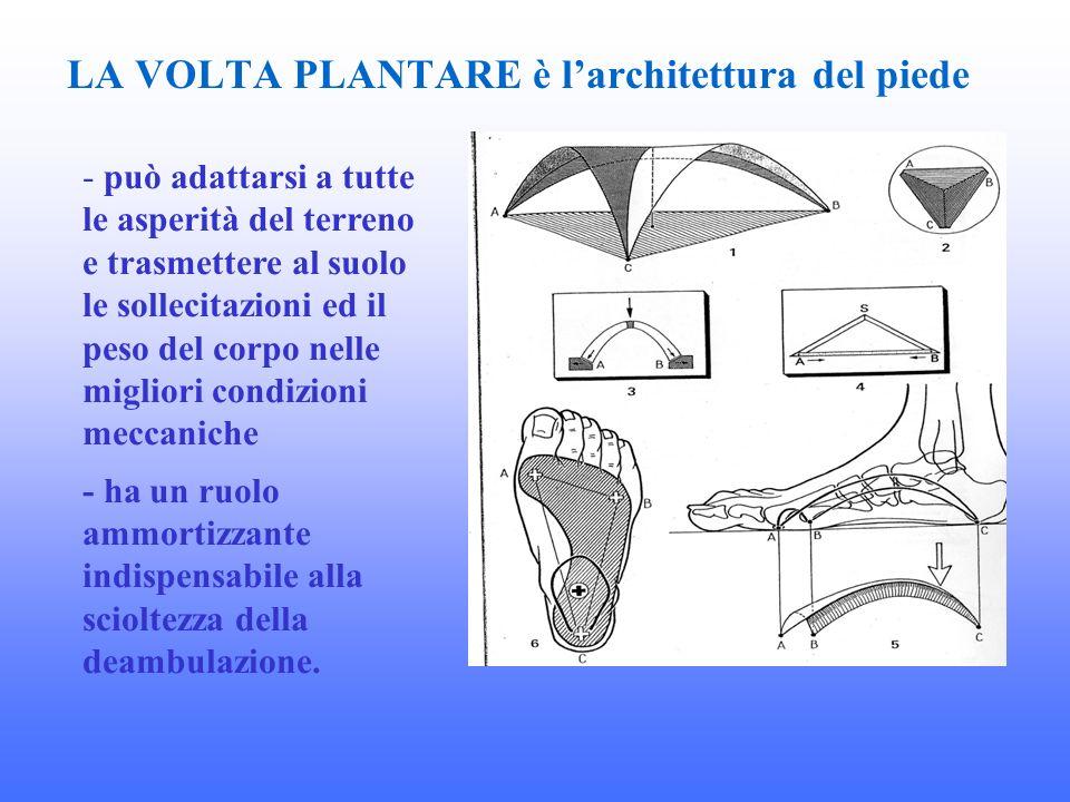 LA VOLTA PLANTARE è larchitettura del piede - può adattarsi a tutte le asperità del terreno e trasmettere al suolo le sollecitazioni ed il peso del co