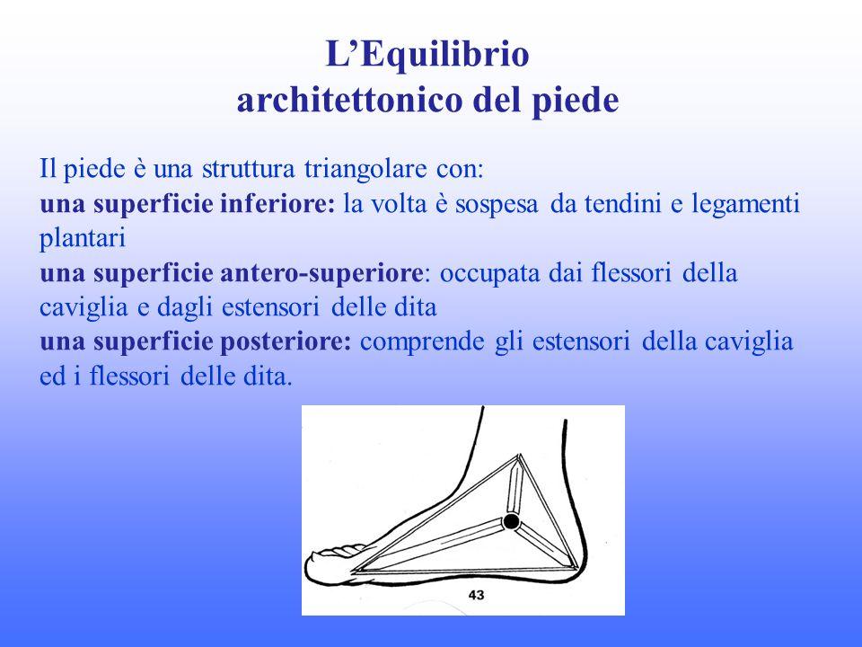 LEquilibrio architettonico del piede Il piede è una struttura triangolare con: una superficie inferiore: la volta è sospesa da tendini e legamenti pla